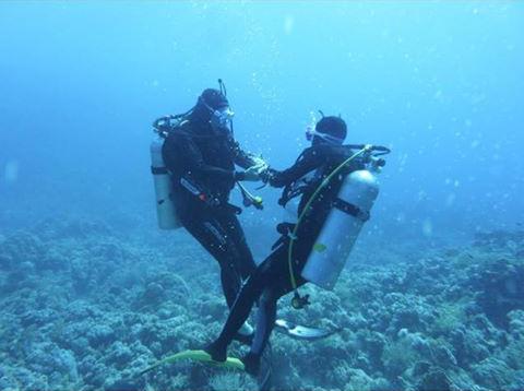 """Coucou d Égypte une photo de plongée en Mer Rouge """"Scuba* Shiho nage"""" ou """"scuba Rockn' tools"""" ????"""